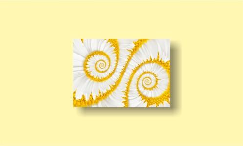 абстракция цветы бесконечность спираль