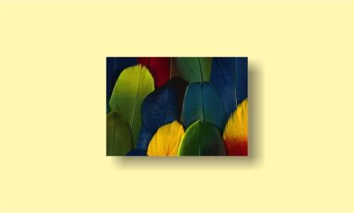 абстракция цветные перья