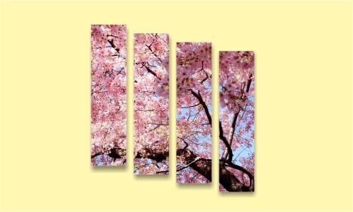 сакура дерево весна