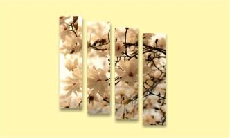 дерево цветение весна