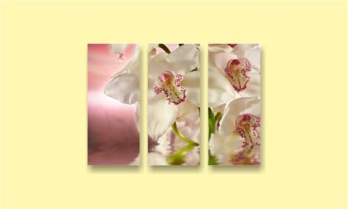орхидея цветок весна