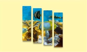 подводный мир рыба океан