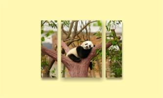 сон панда дерево зелень