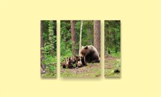 лес медвежата медведица