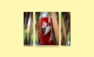 попугай ара листья